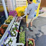 ひまわりを種から植えて観察してみよう!のコーナー*その2