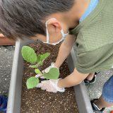 Summer Vegetable Cultivation ~夏野菜の栽培~